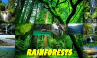 rainforests sounds