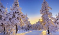 Dawn in Winter Forest